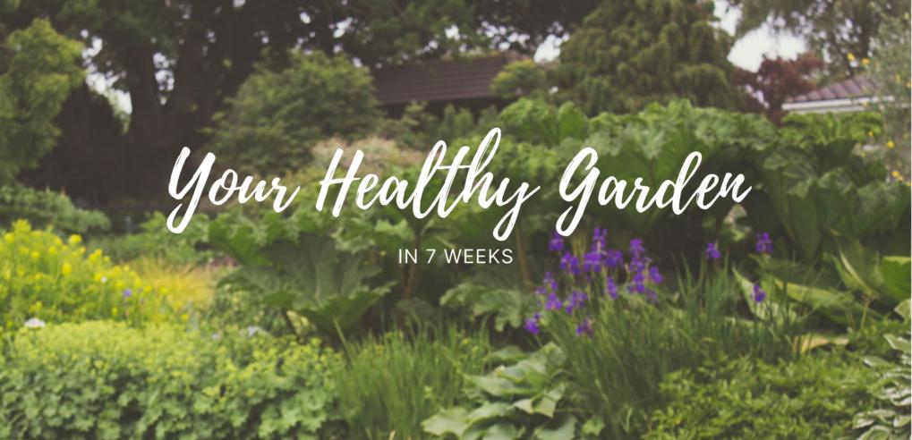 Your-Healthy-Garden-in-7-weeks_Studio-van-der-Park_living_garden_nature-abundance-forestgarden-permaculture-biodiversity